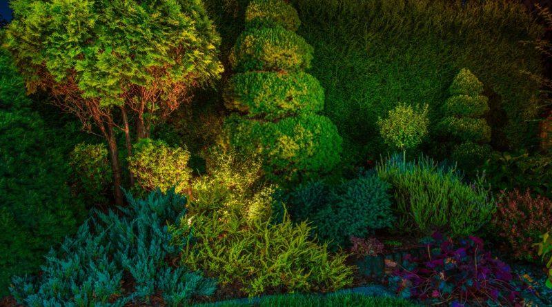 oświetlenie ogrodów
